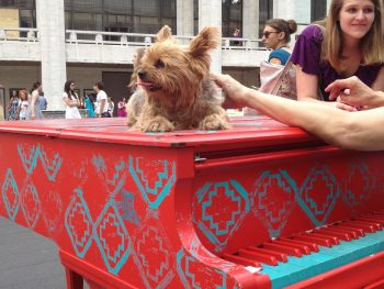 Puppy on Piano